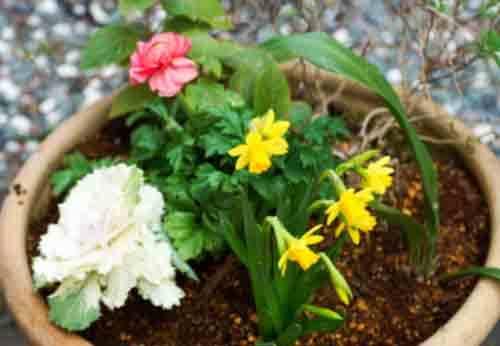 早春の花_-11834.jpg